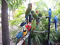 JungleIsland-Parrots.JPG