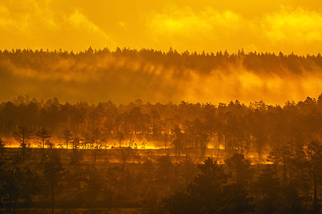 Golden hour in Kõnnu Suursoo bog