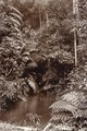 KITLV - 50216 - Botanical Gardens in Singapore - circa 1900.tif