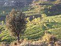 KPK village 07.jpg