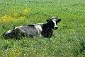 KRASULA W KWIATACH na Zaleśnej 1 - panoramio.jpg