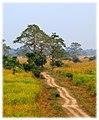 Kaziranga Track (107933917).jpeg