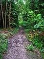 Kemphill Moor Copse - geograph.org.uk - 530629.jpg
