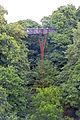 Kew Gardens treetop walkway amid trees.jpg