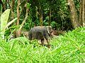 Khuekkhak, Takua Pa District, Phang-nga, Thailand - panoramio (9).jpg