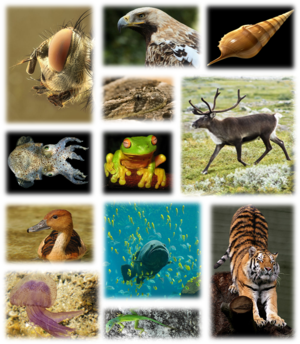 Global biodiversity - Examples of the biodiversity of the Earth.