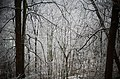 Kings Forest Park After Freezing Rain, Hamilton Ontario.JPG