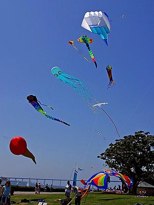 Kites flying on sky.jpg
