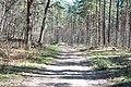 Kleistu mežs, Rīga, Latvia - panoramio.jpg
