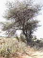 Kosli, Haryana 123302, India - panoramio (35).jpg
