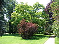 Kostelecký zámecký park (35).JPG