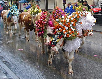 Vorarlberg - The movement of cattle from the high pastures to the villages. This tradition is popular with tourists.