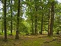 Lüneburger Heide - Hutewald 002.jpg