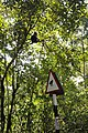 LTMacaque and road signage DSC0158.jpg