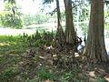 Lake Irma, Lakeland 04.JPG