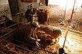 Lambing At the Brink Farm - geograph.org.uk - 746231.jpg