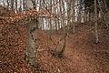 Langenenslingen-5634.jpg