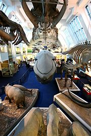 A balcony view of the Large Mammals Hall