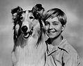 Lassie Tommy Rettig Circa 1955.jpg