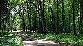Lasy kostkowskie , On a hiking trail through Kostkowo woods - panoramio (2).jpg