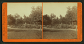 Lawn view at T.H. Selby's Residence, Fair Oaks, Cal, by Watkins, Carleton E., 1829-1916 2.png