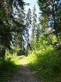Le sentier du chard du beurre - panoramio (3).jpg