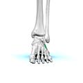 Left cuboid bone 01.png