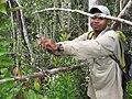 Lemur Trap Marojejy 2009.jpg