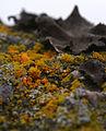 Lichens (2707325313).jpg