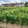 Liebfrauenwein - panoramio (1).jpg