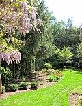 Lilacs blooming - panoramio.jpg