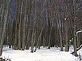 Lindens.Липы - panoramio.jpg