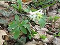 Livadske biljke 17.JPG