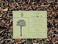 Livistonia australis PlacaInfo 2010-10-26 ArboretoParqueElPilarCiudadReal.jpg