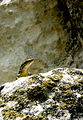 Lizard in Bakchisarai.jpg