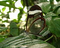 London Zoo 01083 cr.jpg