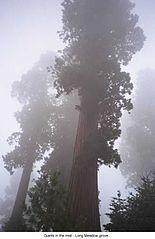 [Long Meadow Grove CA.jpg]