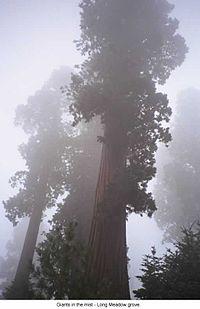 Long Meadow Grove CA.jpg