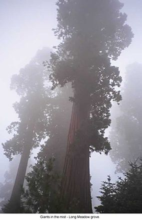 Sequoia National Forest Wikipedia