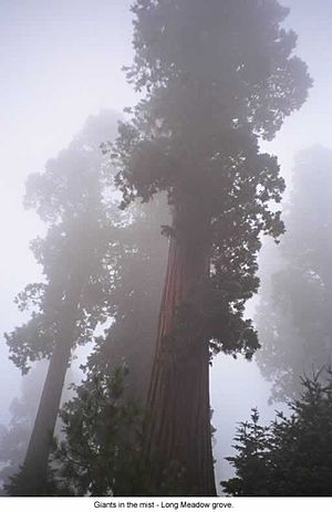Sequoia National Forest - Image: Long Meadow Grove CA