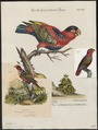 Lorius lori - 1700-1880 - Print - Iconographia Zoologica - Special Collections University of Amsterdam - UBA01 IZ18500294.tif