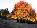 Los cerezos de la escuela - panoramio.jpg