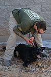 Luke military working dogs 151118-F-HT977-259.jpg