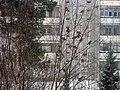 Lyovintsy, Kirovskaya oblast', Russia, 612079 - panoramio (108).jpg