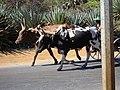 MADAGASCAR BOENY (2).jpg