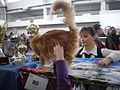 MTP Cat Show 2230071.JPG
