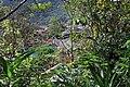 Machu Picchu, Peru - Laslovarga (309).jpg