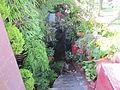 Madeira em Abril de 2011 IMG 1804 (5664234710).jpg
