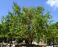 Magraner al parc de Benicalap.JPG