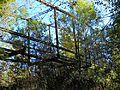 Mahned Bridge, underside camelback truss.jpg